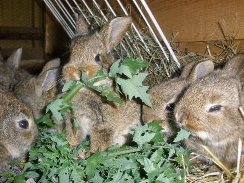 baby rabbits eating leaves