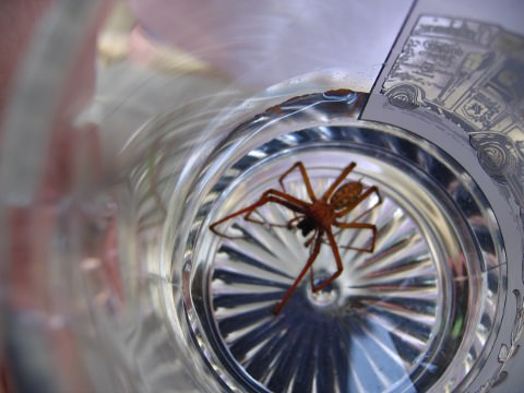 Another view of the spider in the glass.