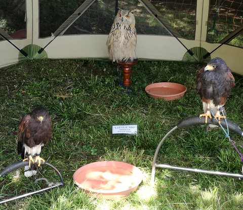 Siberian Eagle Owl and other birds