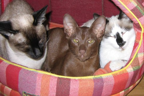 three of sally's cats