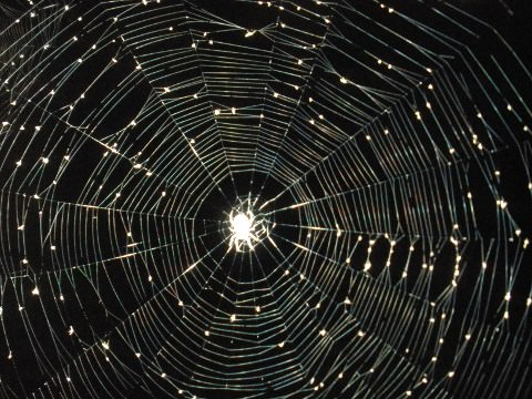 A spider's web in the moonlight