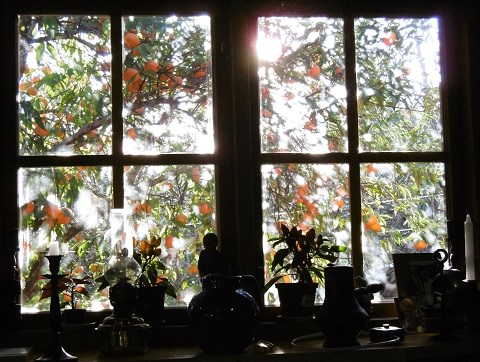 View of Hedwig & Willem's tangerine tree