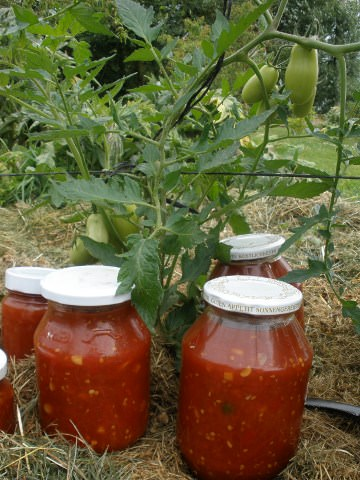 A photo of bottled Tomato Chili Jam.
