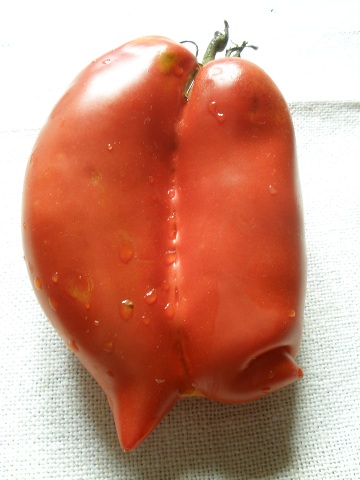 A photo of two tomatoes together.