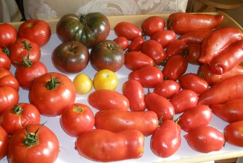 A photo of a variety of tomatoes.