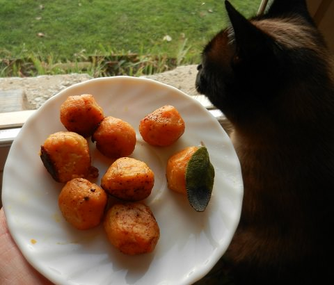 Butter browned gnocchis with my cat!